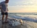 Jorge Murillo rescata tiburona en miami usa