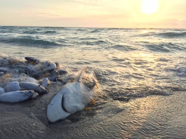 colombia-ecoturismo-rescata-un-tiburon