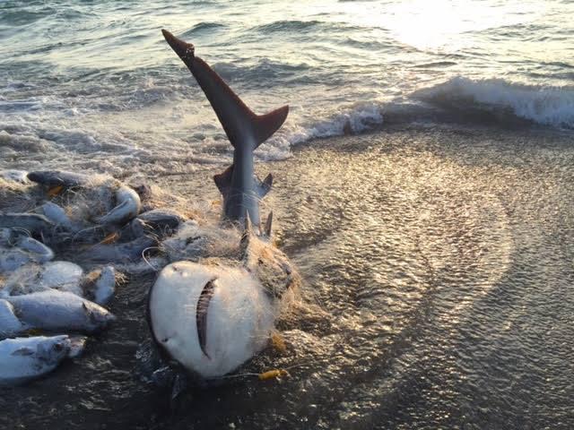 cruceros-ecologicos-colombia-cuidando-la-fauna